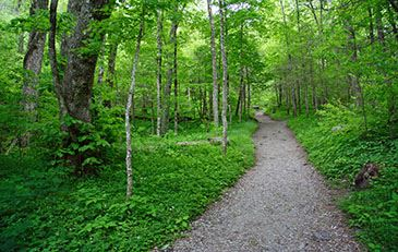 Image of wooded trail