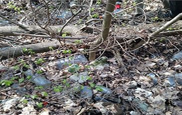 image of trash and debris in woods
